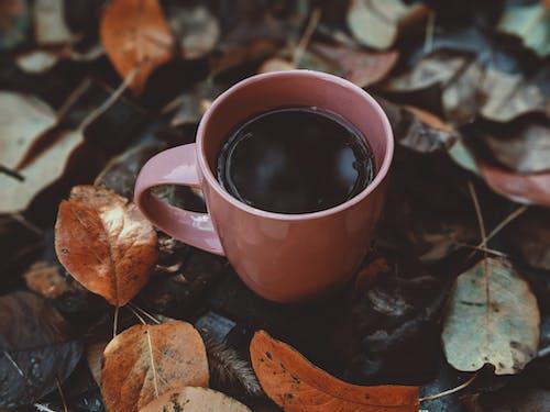 ahşap, an, atmosfer, Çay içeren Ücretsiz stok fotoğraf