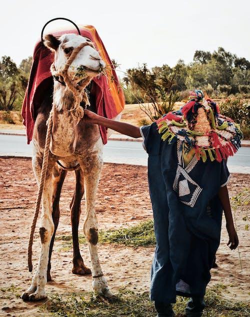 Man Holding Camel