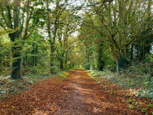 Photos gratuites de arbres, automne, brun rouillé, chemin