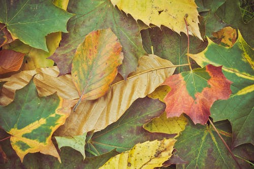çekilmiş, güz yaprakları, kuru yapraklar, kurumuş yapraklar içeren Ücretsiz stok fotoğraf
