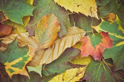 Fotos de stock gratuitas de follaje de otoño, hojas, hojas de otoño, hojas secas