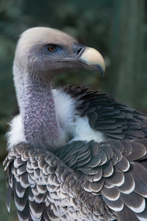 selective Focus Close-up Photo of White and Gray Vulture