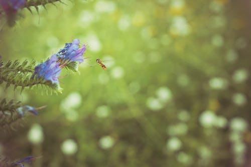 Fotos de stock gratuitas de abeja, animal, bokeh, efecto desenfocado