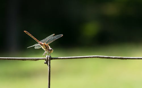 Close-Up Photo of Dragonfly Perched on Wire