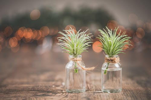 Shallow Focus Photo of Green Leafed Plant in Vials