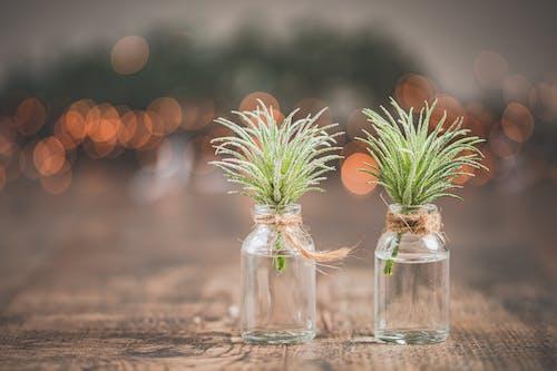 Fotos de stock gratuitas de bokeh, botella de cristal, botella de vidrio, decoración