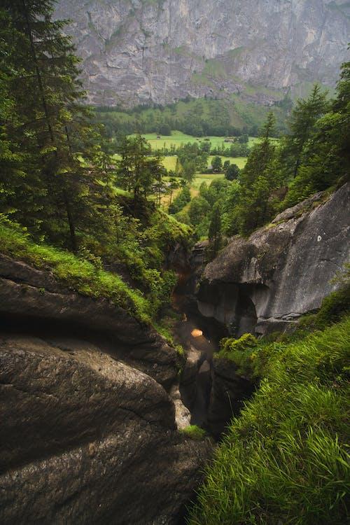 Ingyenes stockfotó erdő, hegy, szakadék témában