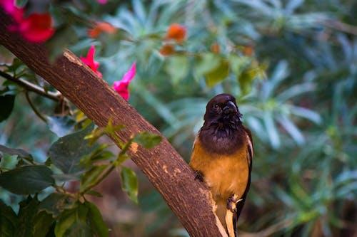 คลังภาพถ่ายฟรี ของ นก, นกสีส้ม