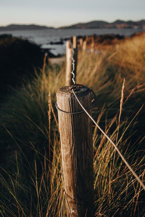 Fotos de stock gratuitas de al aire libre, cable, cerca, césped