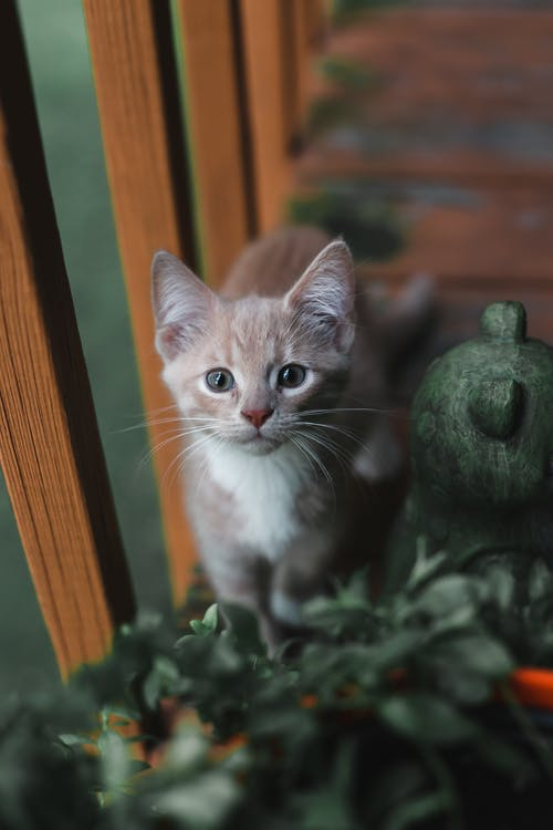 Photo Of Kitten