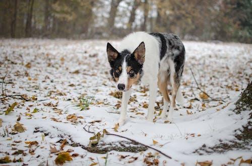 Photo Of Dog Walking On Snow
