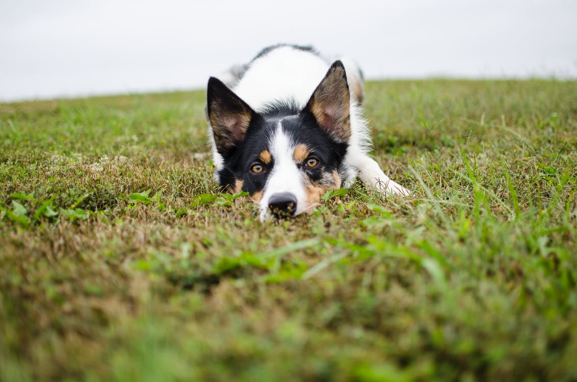 Photo Of Dog Laying On Grass