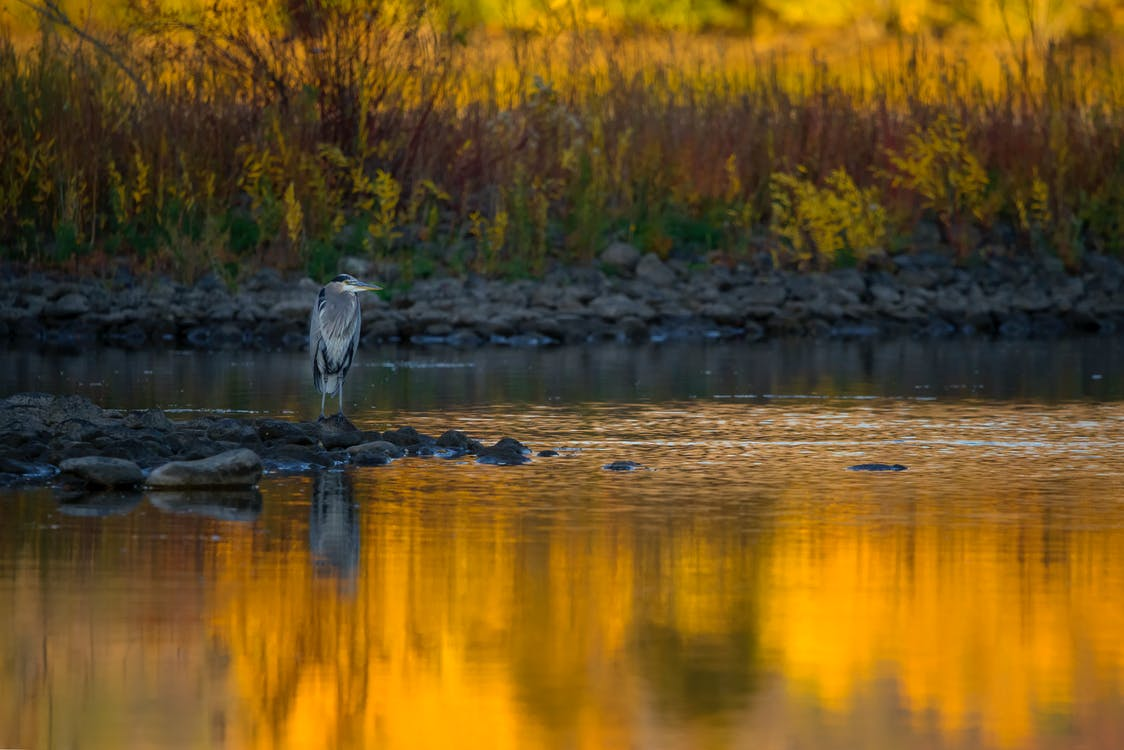 Gray Bird on Ground Near Water