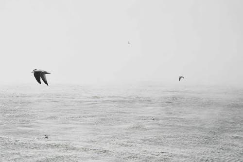 カモメ, ビーチ, フライト, ミニマリズムの無料の写真素材
