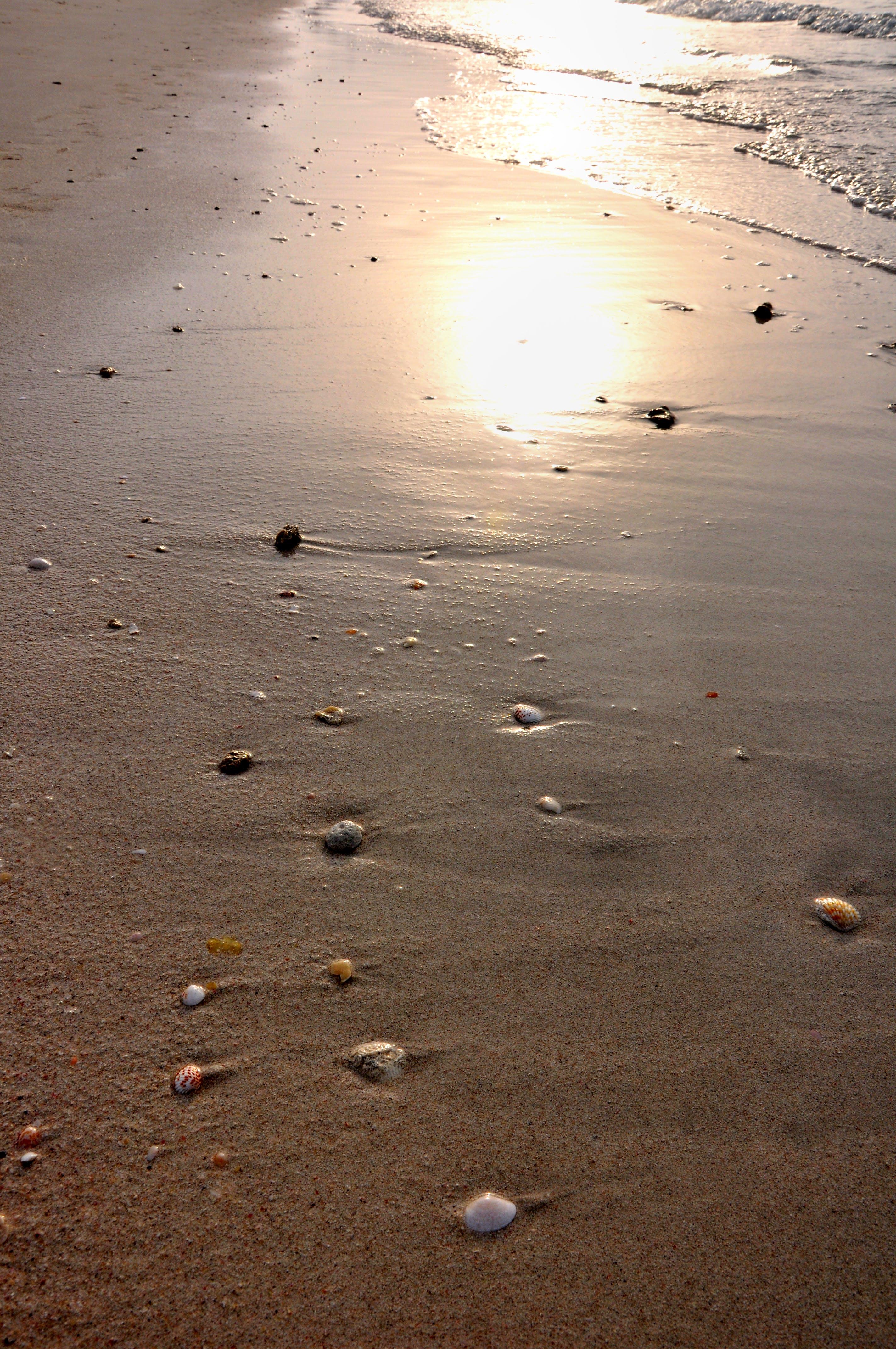 Free stock photo of sand beach, sea, shells