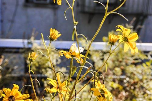 Ingyenes stockfotó aranysárga, édes, gyönyörű virág, környezet témában