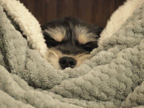 Immagine gratuita di cucciolo