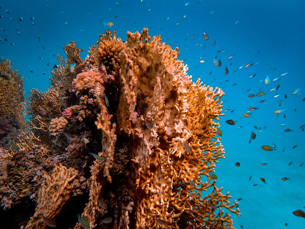 Photo Of Brown Coral Reef