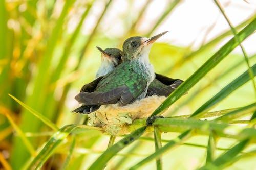Ingyenes stockfotó a természet szépsége, fészek, gyárak, kolibri témában