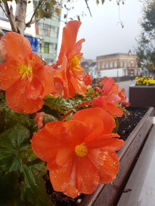 Kostenloses Stock Foto zu blumen, blumenkasten, orangenblüte, schöne blumen