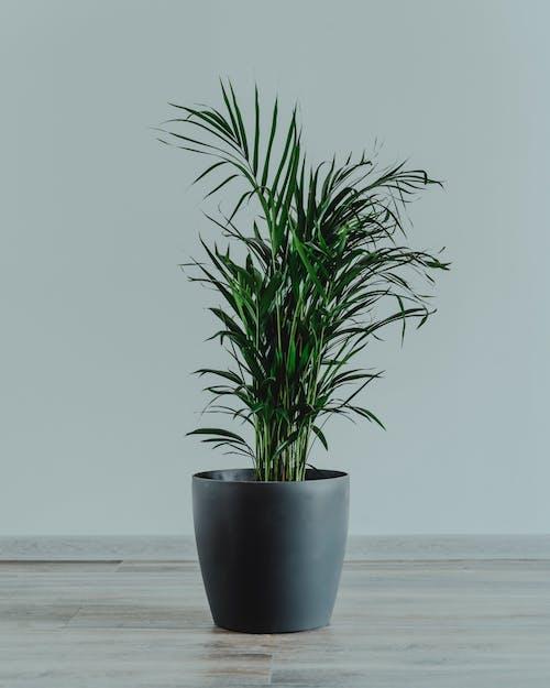 Ingyenes stockfotó belső, beltéri, beltéri növény, cserepes növény témában