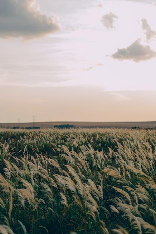 Imagine de stoc gratuită din afară, arc, câmp, cer
