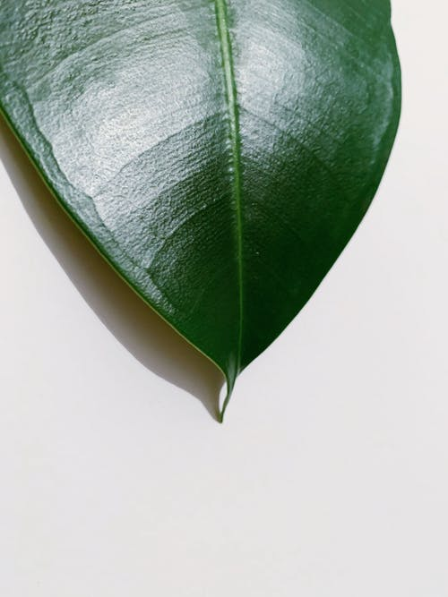 Green Leaf on White Surface