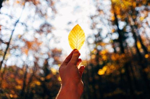 Foto stok gratis berbayang, cahaya, daun, daun gugur