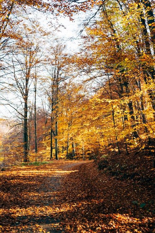 Photo of Pathway Near Autumn Leaves