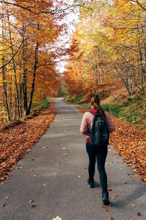 Foto stok gratis alam, berjalan, Daun-daun, dedaunan