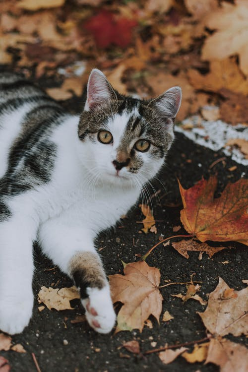 Photo Of Cat Laying On Leaves