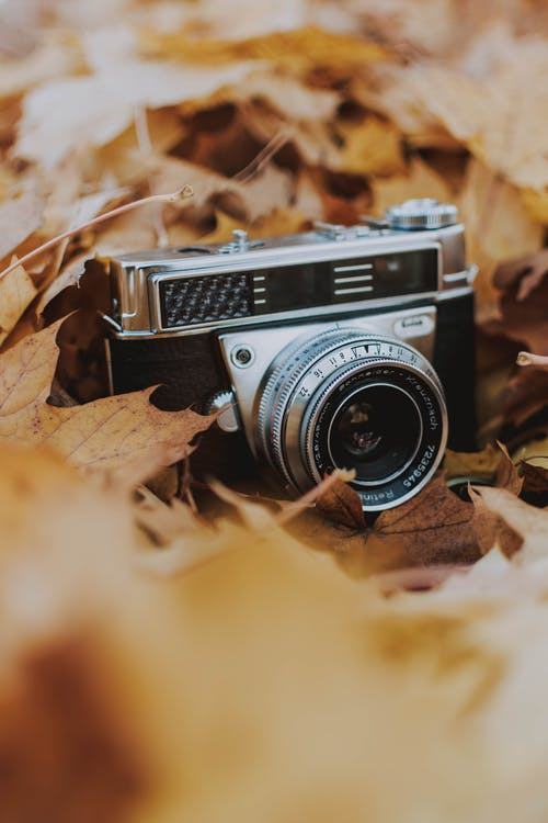 Photo Of Old Camera On Leaves