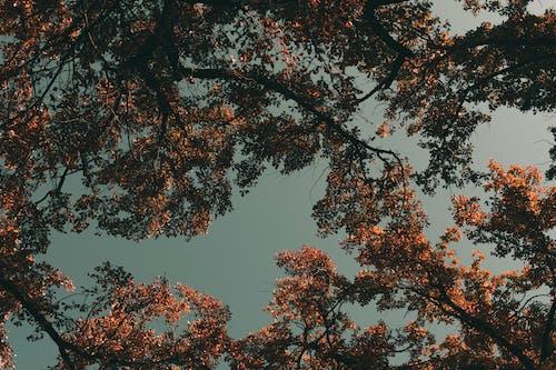 Gratis stockfoto met 4k achtergrond, bladeren, bomen, buiten
