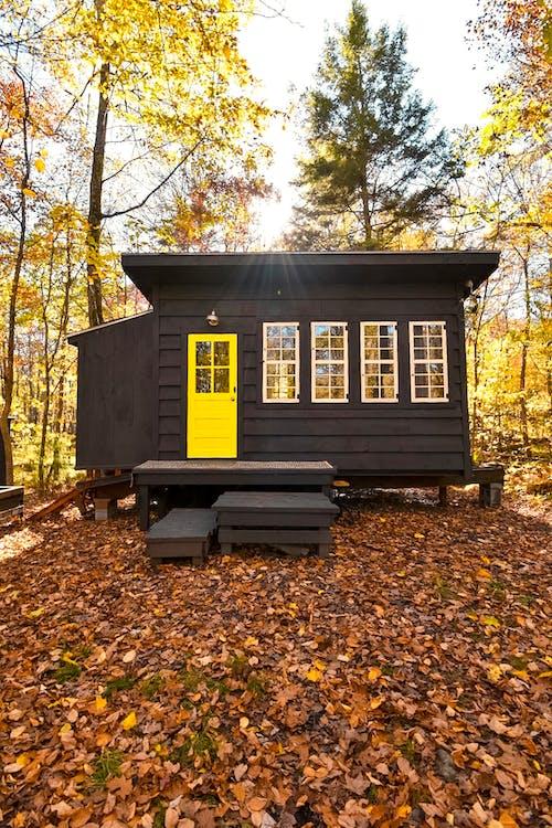 Free stock photo of autumn, camping, daylight, fall