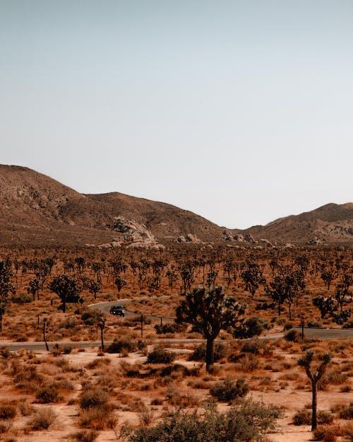 Ilmainen kuvapankkikuva tunnisteilla aavikko, luonto, maisema, puut