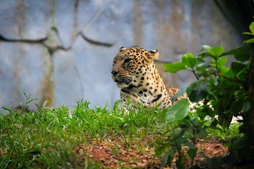 Kostnadsfri bild av djur, djurfotografi, djurpark, farlig