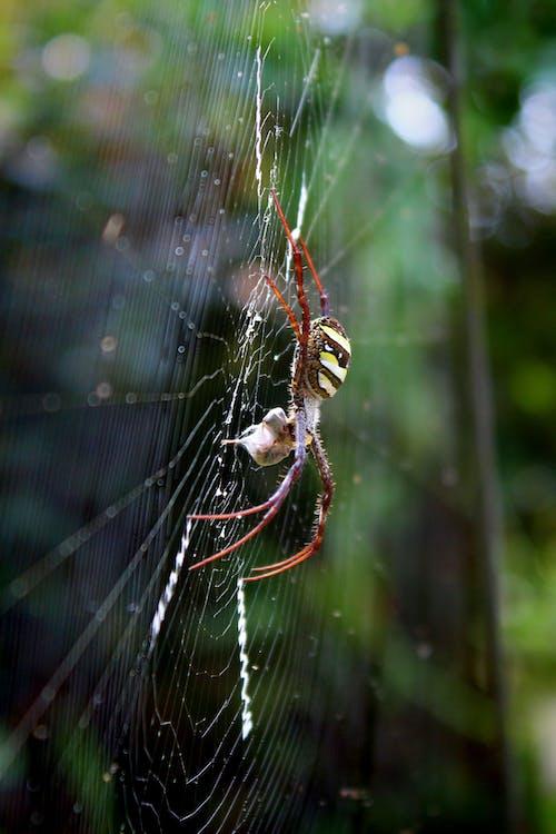 Fotos de stock gratuitas de al aire libre, animal, arácnido, araña