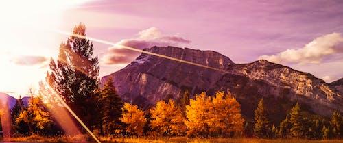 Free stock photo of autumn, autumn color, autumn trees, cliff