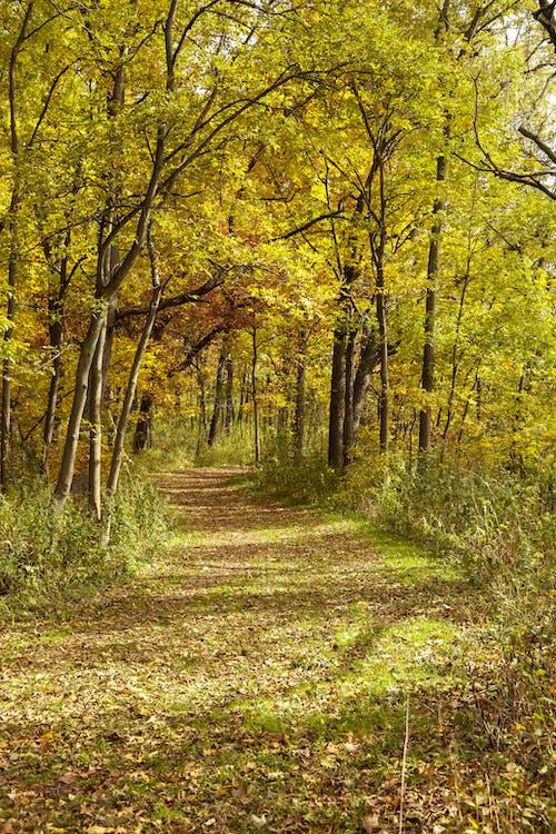 Immagine gratuita di arancia, autunno, verde