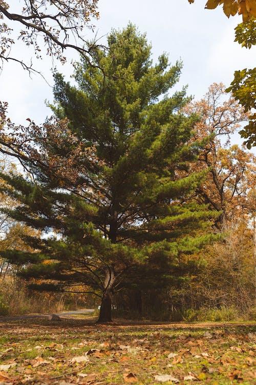 Immagine gratuita di autunno