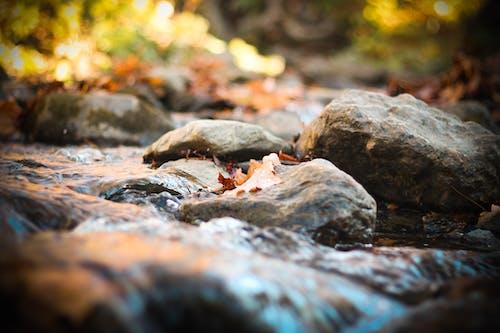 Gratis stockfoto met stroom water focus herfst aard