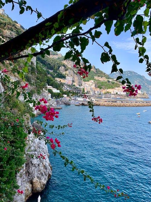 Ảnh lưu trữ miễn phí về amalfi, bờ biển Amalfi, những bông hoa đẹp