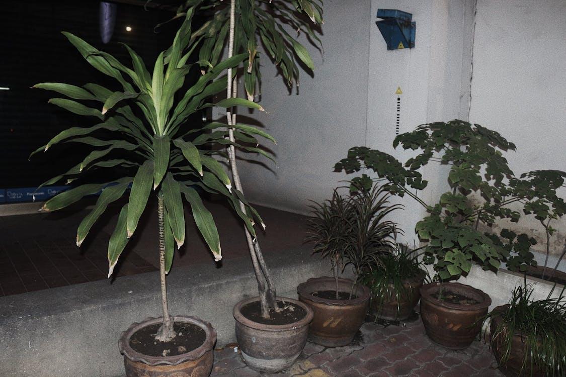 nature, palms, plants