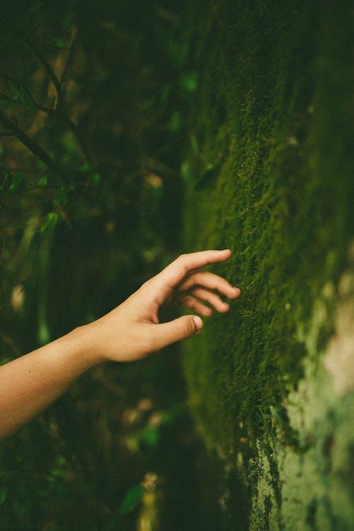 手, 綠色, 苔蘚 的 免費圖庫相片
