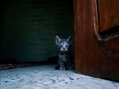 Ilmainen kuvapankkikuva tunnisteilla algeria, katse, kaunis, kaunis eläin