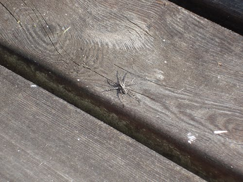 Free stock photo of amputee, disabled, spider