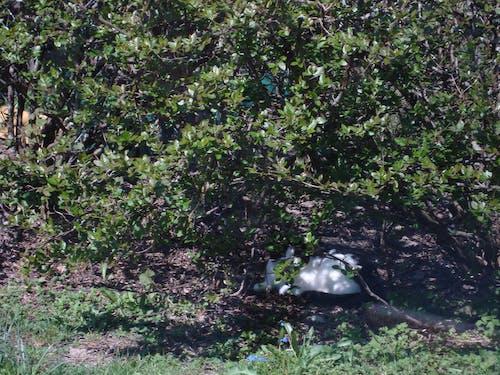 Free stock photo of bush, cat, hiding