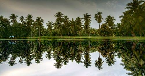 Darmowe zdjęcie z galerii z drzewa, fotografia, odbicie