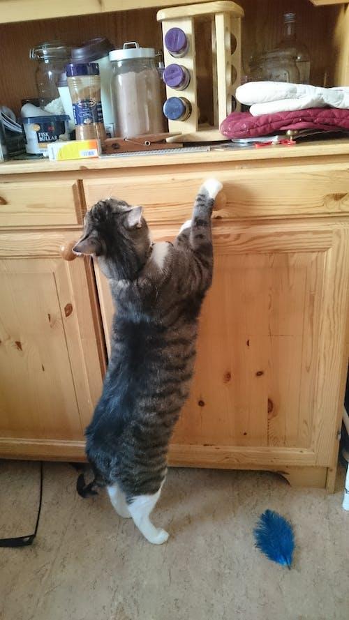 Free stock photo of cat, drawer, kitchen