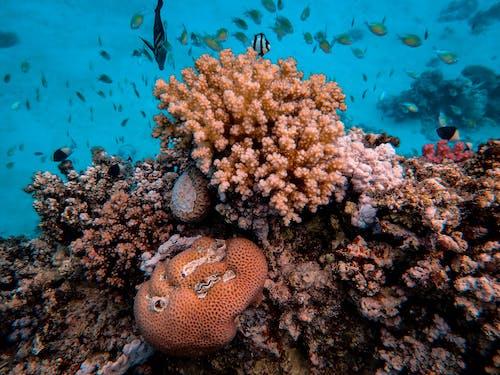 คลังภาพถ่ายฟรี ของ การถ่ายภาพสัตว์ป่า, จมอยู่ใต้น้ำ, ชีวิตทางทะเล, ทางทะเล